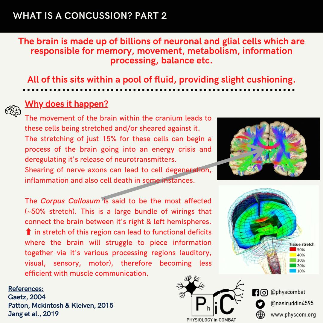Concussion P2 (1)