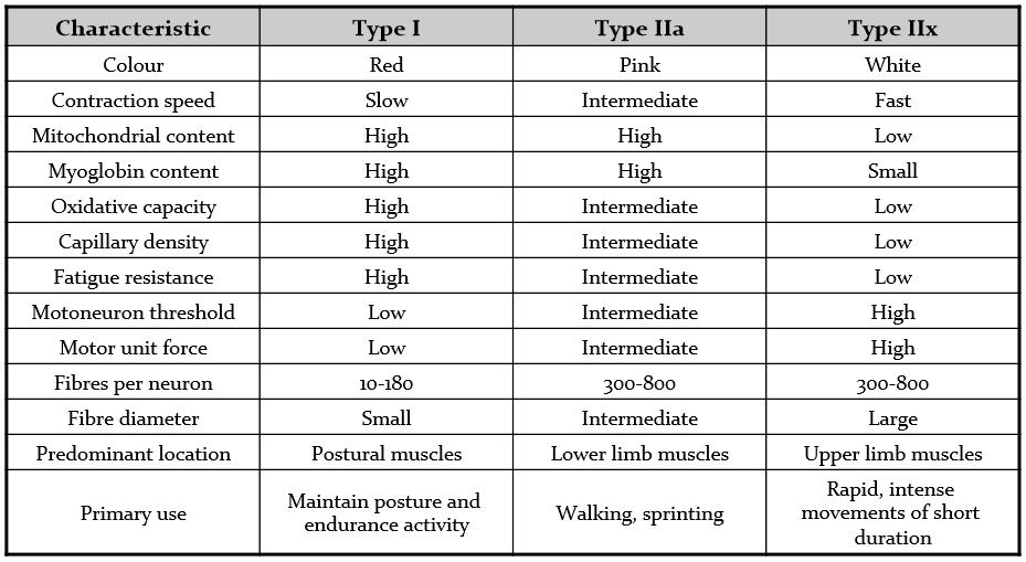 Fiber types1