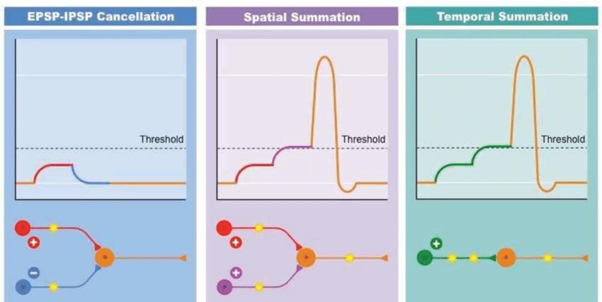Spatial vs Temporal